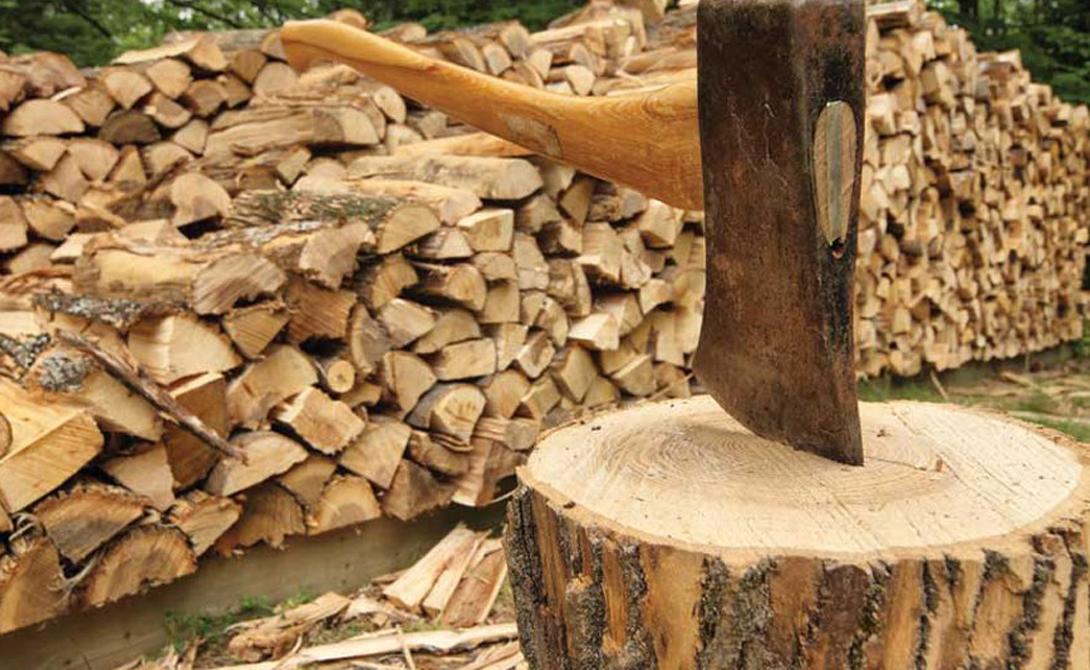 Наломал дров. Курскому пенсионеру грозит срок за незаконную рубку деревьев